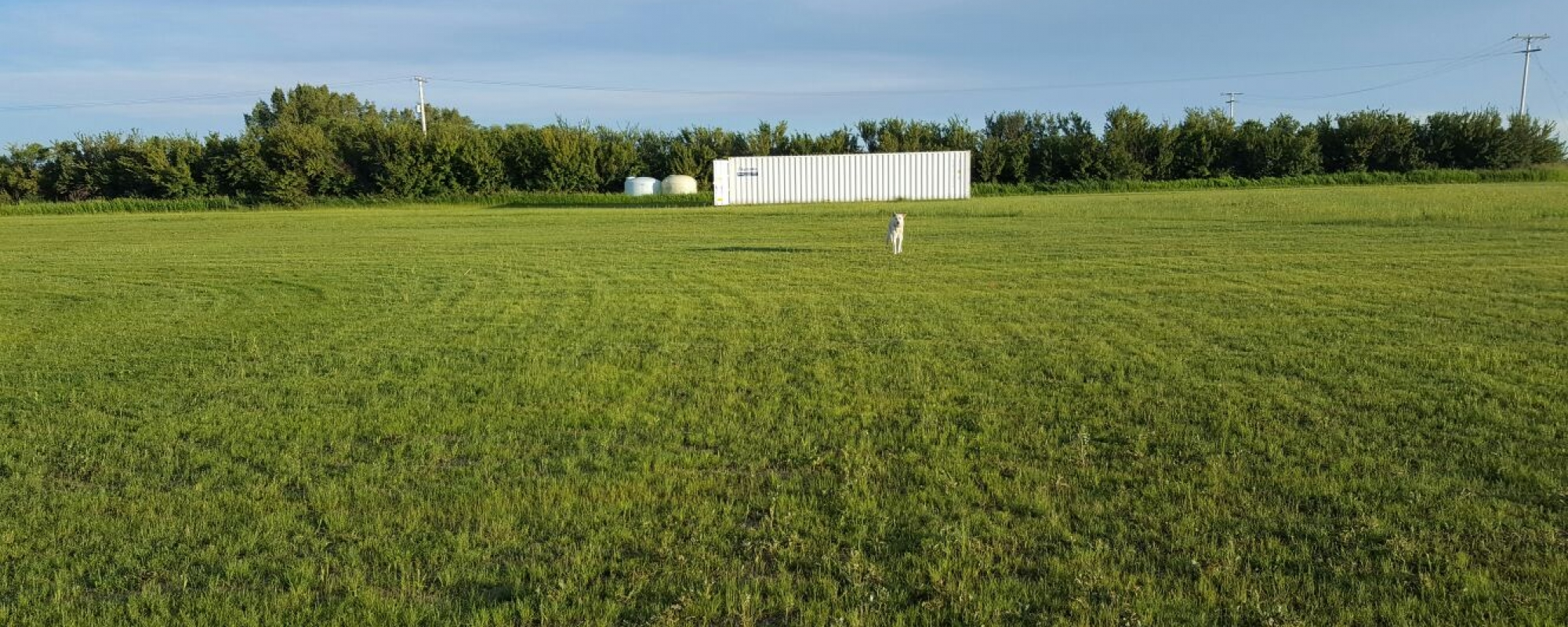 We're building our own cricket field...